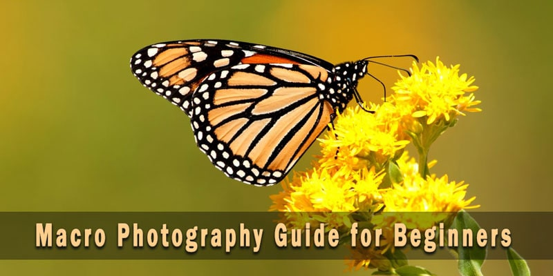 Macro Photography Guide for Beginners