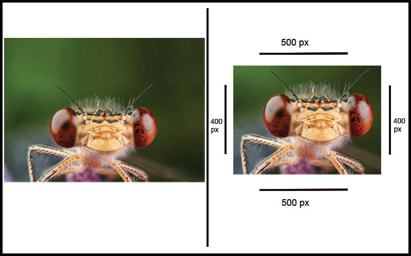 Post Processing of a Macro Photograph