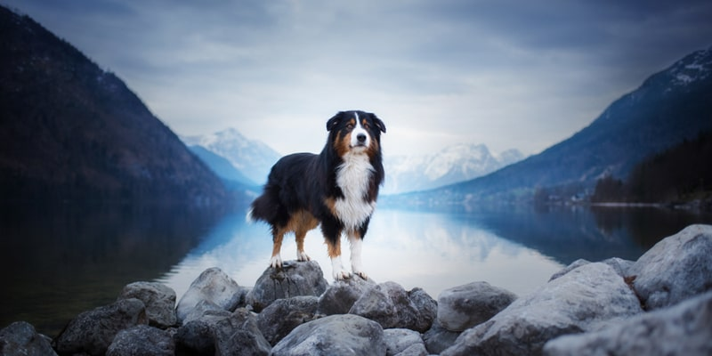 Pet Photography Ideas after COVID 19