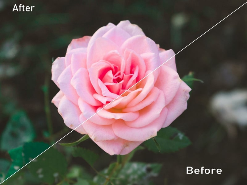 Adobe Photoshop Lightroom Editing