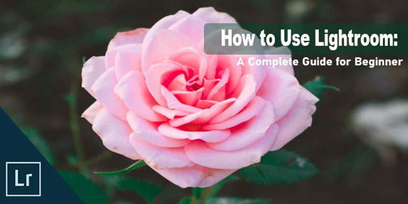 How to Use Lightroom: A Complete Guide for Beginner