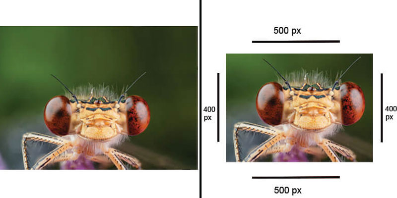 Post Processing of a Macro Photographs