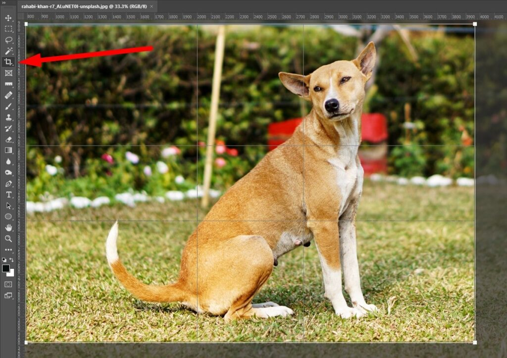 Crop Image for Editing Photos in Photoshop