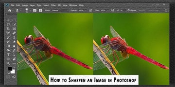 Sharpen an Image in Photoshop